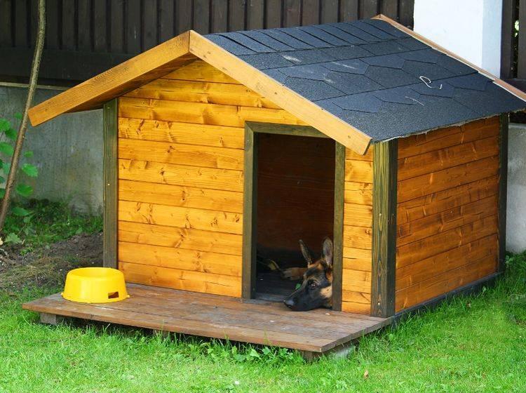 Eine Hundehütte bietet viel Platz für schöne Einrichtungsgegenstände wie Decken, Kissen, Spielzeug und Co. – Shutterstock / DaCek