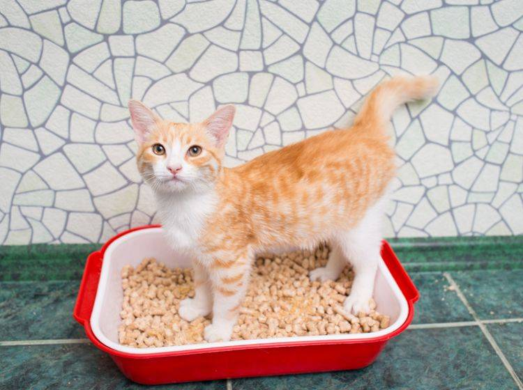 Das Badezimmer ist ein guter Ort für das Katzenklo – Shutterstock / Tiplyashina Evgeniya
