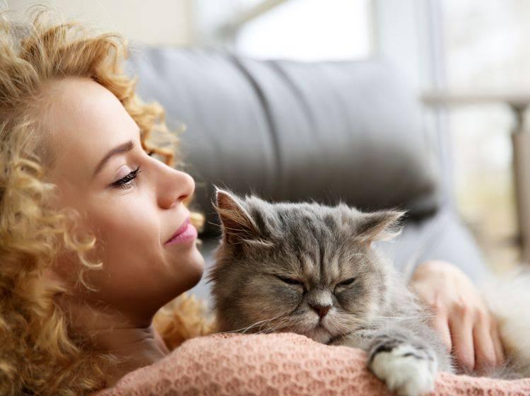Mit der Katze zu kuscheln tut nicht nur dem Menschen gut – Shutterstock / Africa Studio