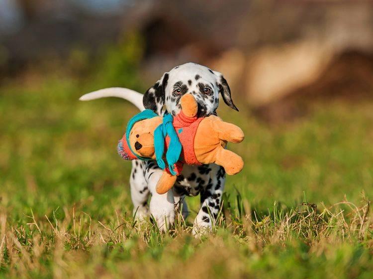 Hunde, die gern apportieren, lernen das Aufräumen besonders schnell – Shutterstock / Rita Kochmarjova