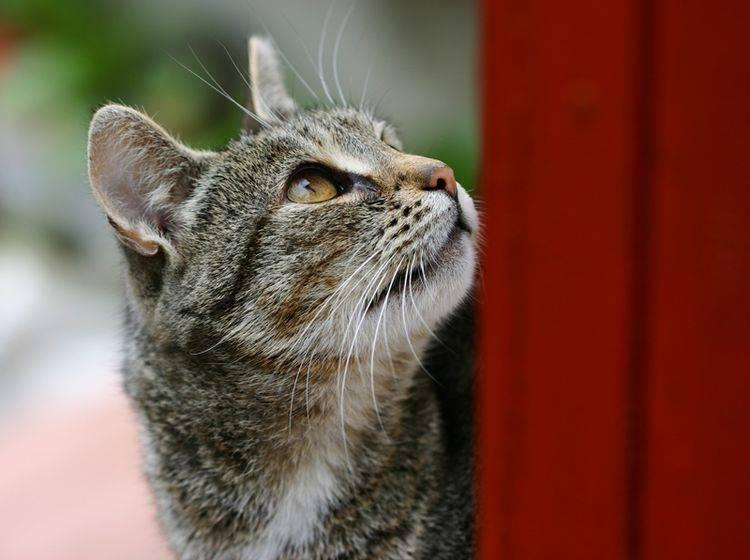 Damit Katzen auch im Alter neugierig und geistig agil sind, ist frühe Förderung wichtig – Shutterstock / PhotoBarmaley