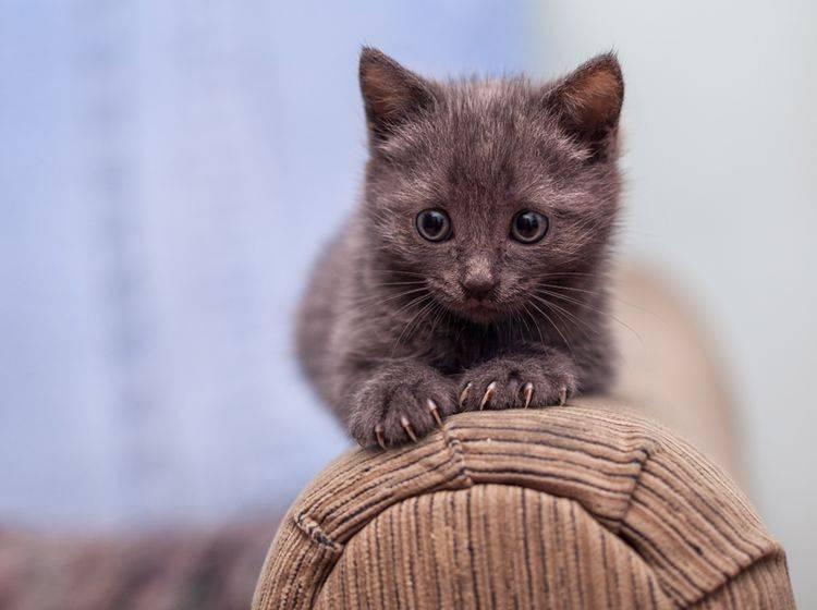 Auch kleine Katzen müssen lernen, mit ihren Krallen als Werkzeug richtig umzugehen – Shutterstock / Andrey Khusnutdinov