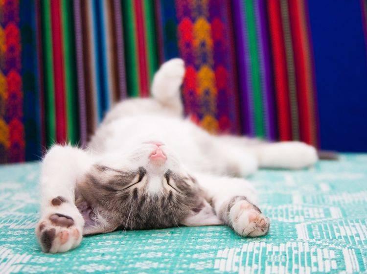 Dieses kleine Kätzchen schert sich nicht um dumme Sprüche – Shutterstock / TalyaPhoto