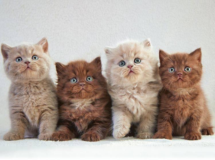 Katzen können unterschiedliche Persönlichkeiten haben – Shutterstock / MaraZe