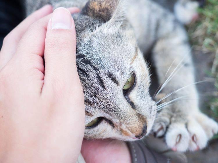 Katzen sind sehr sensible Tiere, daher sollten Sie immer geduldig mit ihnen sein – Shutterstock / Montree Sanyos
