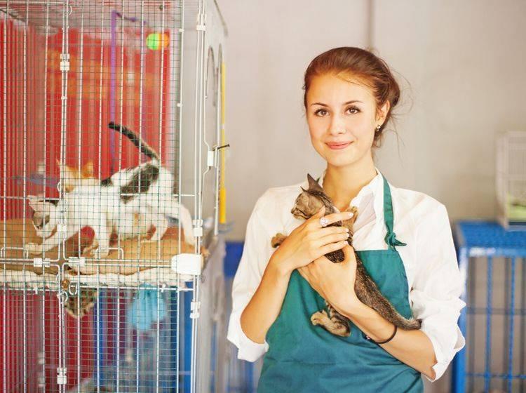 Ein Tierheim ist auf Dauer kein idealer Lebensraum für Tiere, auch wenn sie dort bestens versorgt werden – Shutterstock / Mila Supinskaya
