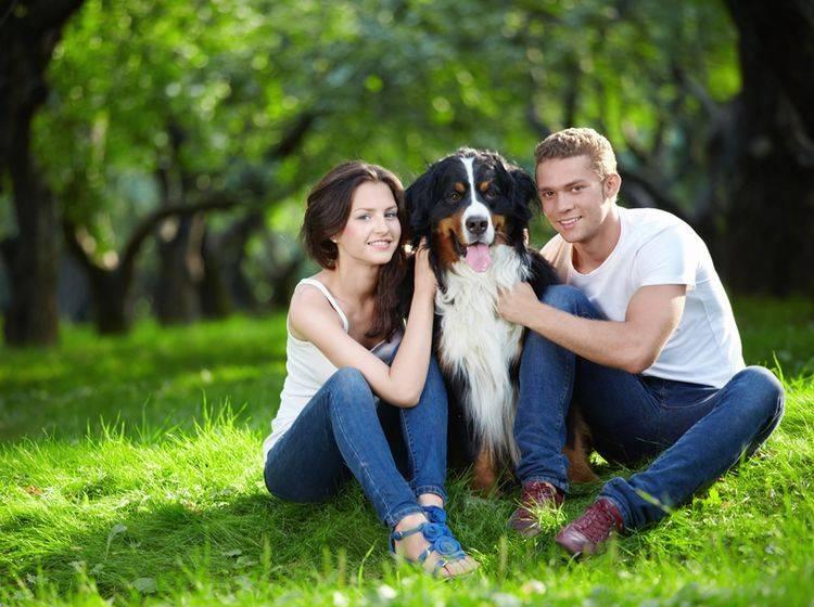 Gesucht und gefunden: Glückliches junges Paar mit süßem Berner Sennenhund – Shutterstock / LuckyImages
