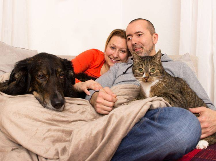 Hundemensch oder Katzenmensch: Warum nicht einfach beides? – Shutterstock / Tibanna79