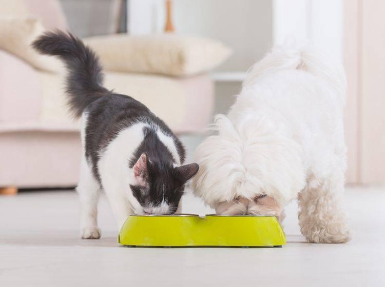 Katzen und Hunde haben unterschiedliche Trinkgewohnheiten – Shutterstock / Monika Wisniewska