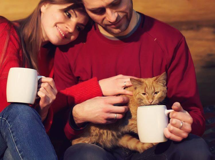 Der Weg zum Herzen eines Katzenhalters geht über seine Samtpfote – Shutterstock / Evgeny Bakharev