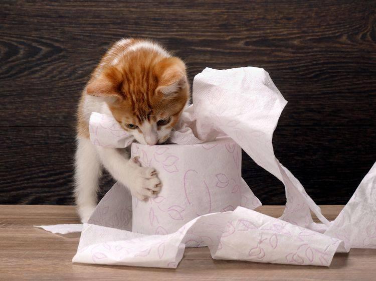 """""""Das durfte ich nicht? Letztes Mal wars noch kein Problem für dich!"""" – Katzenerziehung erfordert Konsequenz und keine Widersprüche – Shutterstock / Irina Kozorog"""