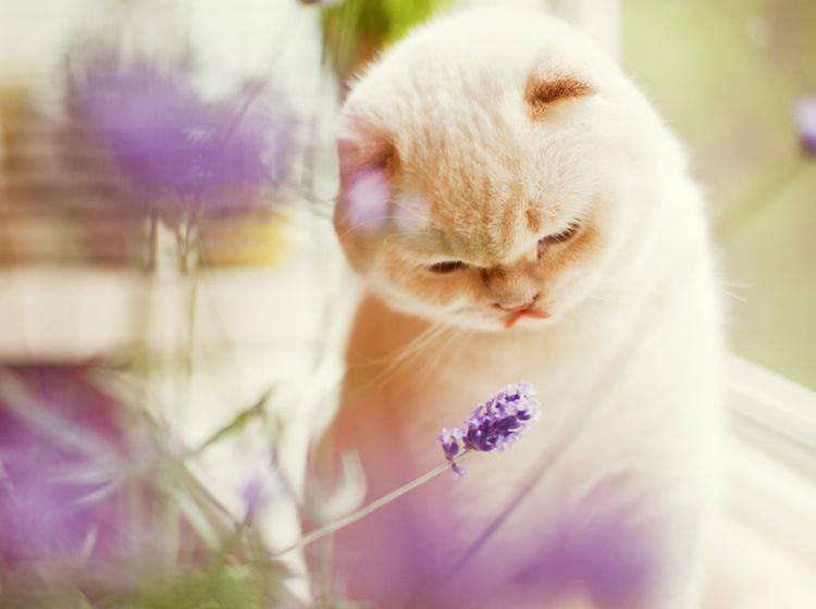 Wer seine Katze mit Naturheilkunde oder Homöopathie behandeln lassen möchte, geht zum Tierheilpraktiker – Shutterstock / aprilante