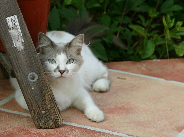 Huch, wo kommst du denn her? Ist Ihnen eine Katze oder ein anderes Tier zugelaufen, müssen Sie dies melden – Shutterstock / zippy