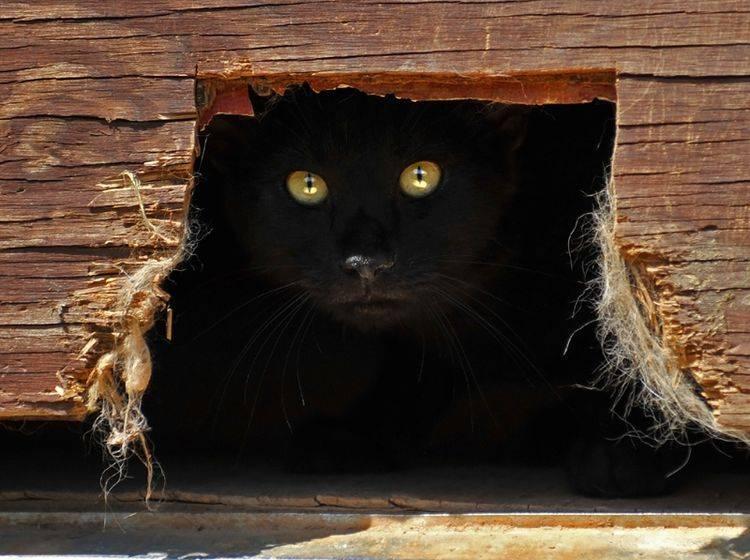 """Katzen können sich unsichtbar machen und besitzen noch viele andere """"Superkräfte"""" – Shutterstock / dmvphotos"""