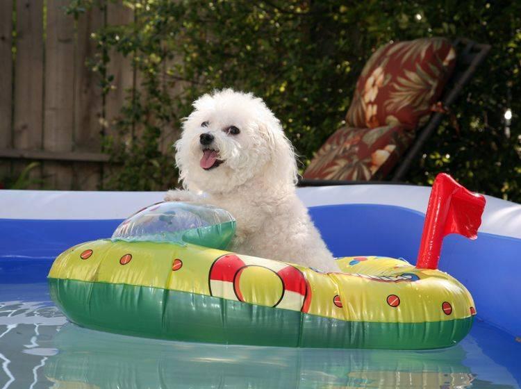 """""""Noch ein bisschen Bootfahren und dann aaaaaab ins kühle Nass"""", denkt sich dieser Sommerhund – Shutterstock / mikeledray"""