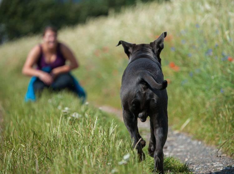 Kontrollierte Freiheit: Egal in welcher Situation Ihr Hund sich befindet – rufen Sie ihn, muss er zurückkommen – Shutterstock / Dora Zett