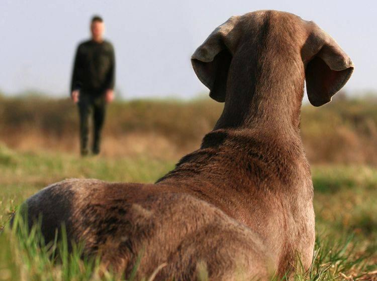 """""""Was ruft Herrchen denn da nur die ganze Zeit? Wie auch immer, ich liege hier ganz gut"""", denkt sich dieser Hund, der nie Rückruftraining genossen hat – Shutterstock / L. Nagy"""