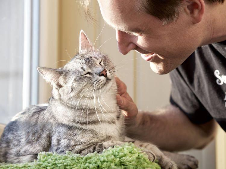 """""""Wir gehören zusammen"""", sind sich Katze und Mensch einig – Shutterstock / Renata Apanaviciene"""