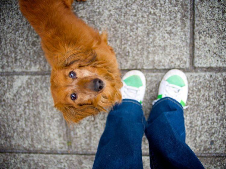 """""""Neeeeein, du wirst doch nicht etwa?"""" – Hunde unterwerfen sich in jungen Jahren tatsächlich über das Anpinkeln von anderen – Shutterstock / aya73aya"""