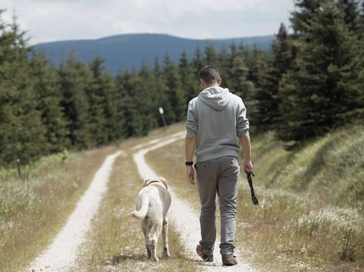 Hunde lieben weite, neue Wege, die es im Urlaub zu entdecken gibt – zum Beispiel im Schwarzwald – Shutterstock / Jaromir Chalabala