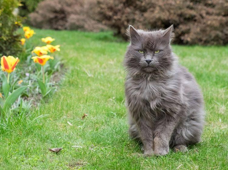"""""""Ich habe schon verstanden, was du von mir willst, ich habe nur keine Lust dazu"""", scheint diese eigensinnige Katze zu denken – Shutterstock / Fotievna"""