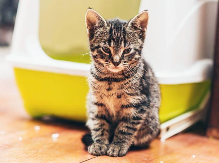 Hoppla, da ist wohl ein bisschen Katzenstreu daneben gegangen – Shutterstock / Ysbrand Cosijn