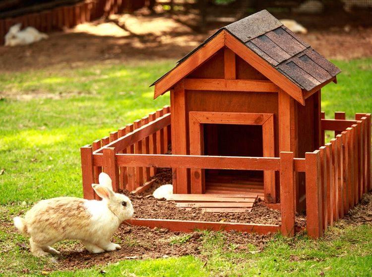 So ein liebevoll selbst gebautes Freigehege ist für Kaninchen etwas Wunderbares – Shutterstock / Ratthaphong Ekariyasap
