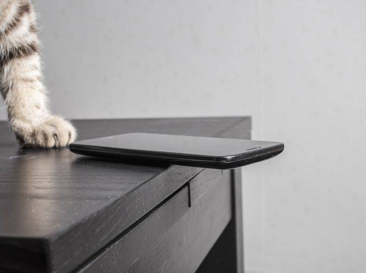Katzenpfote im Anflug: Dieses Smartphone hat die längste Zeit ein heiles Display gehabt – Shutterstock / Koldunov Alexey