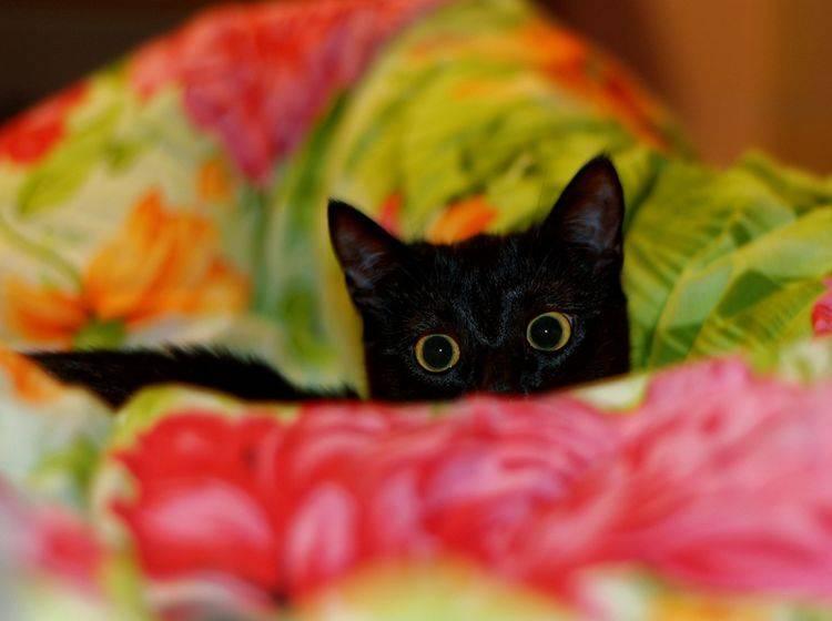 """""""Oh je, da kommt wieder das lärmende Ungeheuer!"""": Kleine Katze hat Angst vorm Staubsauger – Shutterstock / Bleshka"""