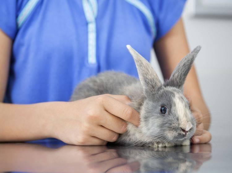 Hat ein Kaninchen Durchfall, gehen Sie am besten sofort zum Tierarzt – Shutterstock / Tyler Olson