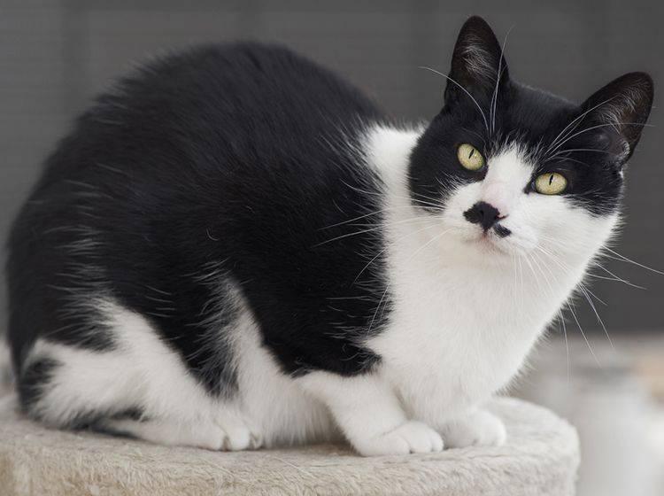 Wenn Katzen nachtragend oder beleidigt wirken, ist das ein Missverständnis – Shutterstock / Stefano Garau