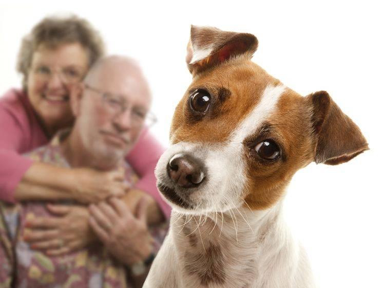"""""""Sie scheint den Mann zu mögen, also mag ich ihn auch"""", schlussfolgert dieser schlaue Jack-Russell-Terrier – Shutterstock / Andy Dean Photography"""