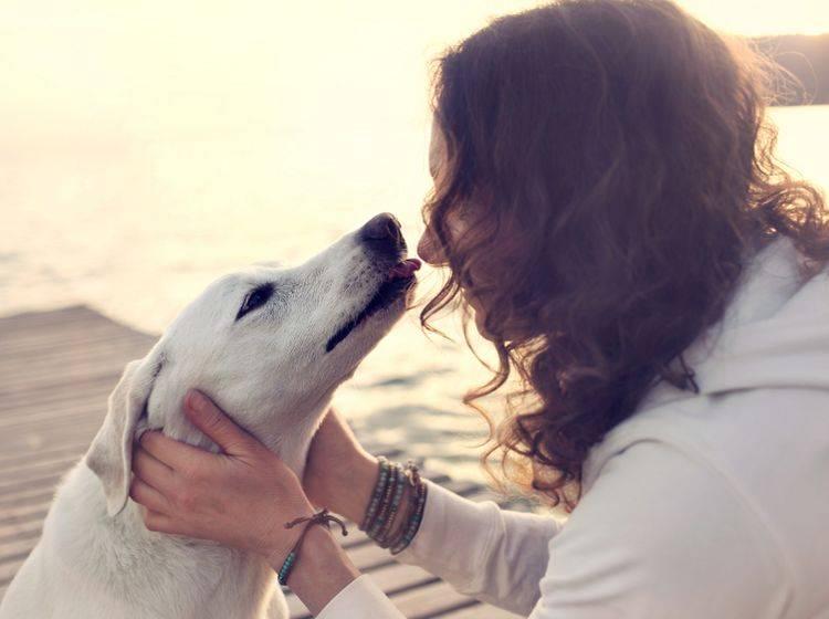 Ein geringes Risiko für Zooanthroponose besteht immer – Auf Zärtlichkeiten mit Ihrem Hund sollten Sie deswegen keinesfalls verzichten – Shutterstock / FCSCAFEINE
