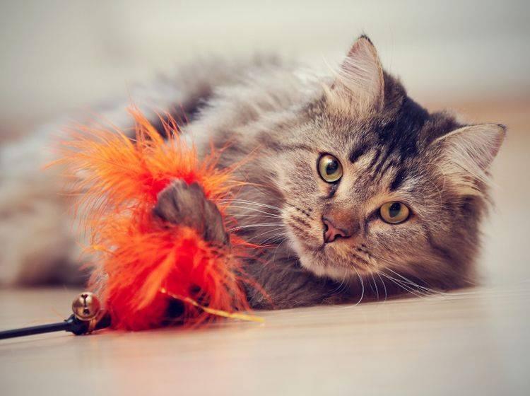 """""""Huch, was haben wir denn hier?! Das jage ich!!!"""", denkt sich diese Katze und beginnt das Spiel – Shutterstock / Elya Vatel"""