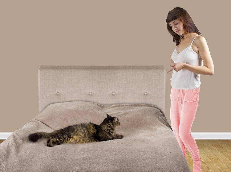 Diese Maine-Coon-Katze versteht nicht, warum ihr Frauchen mit ihr schimpft – Shutterstock / Rommel Canlas