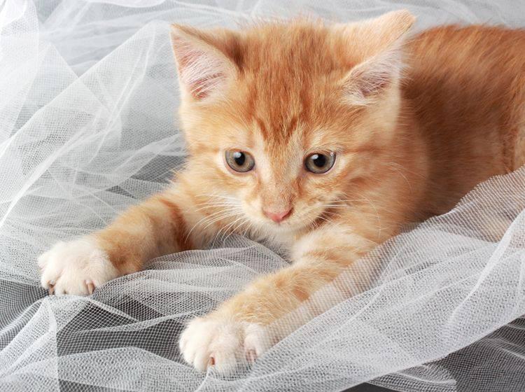 Auch so kleine Katzenbabys wie dieses niedliche Schnuffelschnütchen lassen sich bereits erziehen – Shutterstock / Lana Langlois