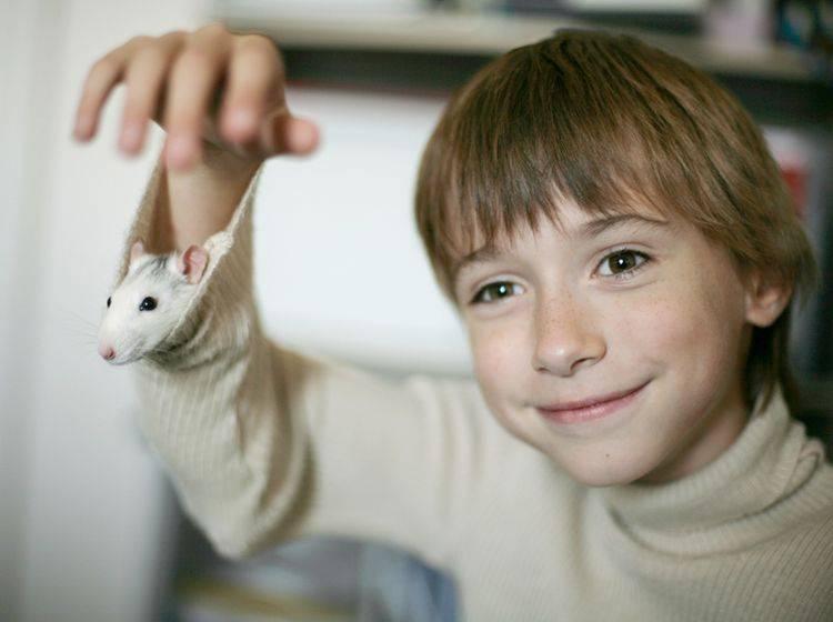 Kuckuck, wer schaut denn da aus dem Ärmel? Da scheint sich die süße Ratte wohlzufühlen! Shutterstock / Anna Jurkovska