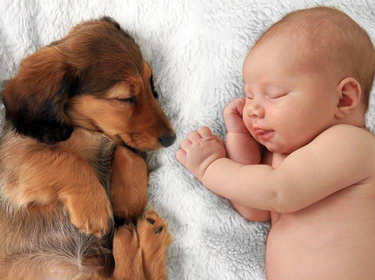 Hund oder Baby zuerst? Bei diesem goldigen Anblick möchte man am liebsten beides gleichzeitig haben – Shutterstock / Hannamariah
