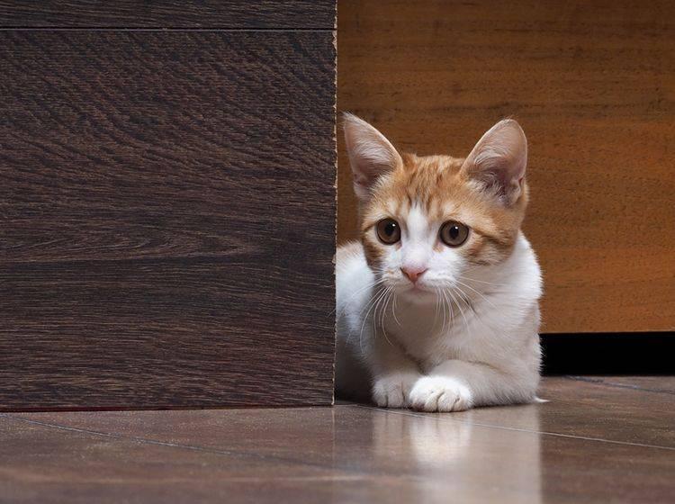 """""""Oh je, was ist denn das da hinten?"""": Kleine Katze hat Angst – Shutterstock / Irina Kozorog"""