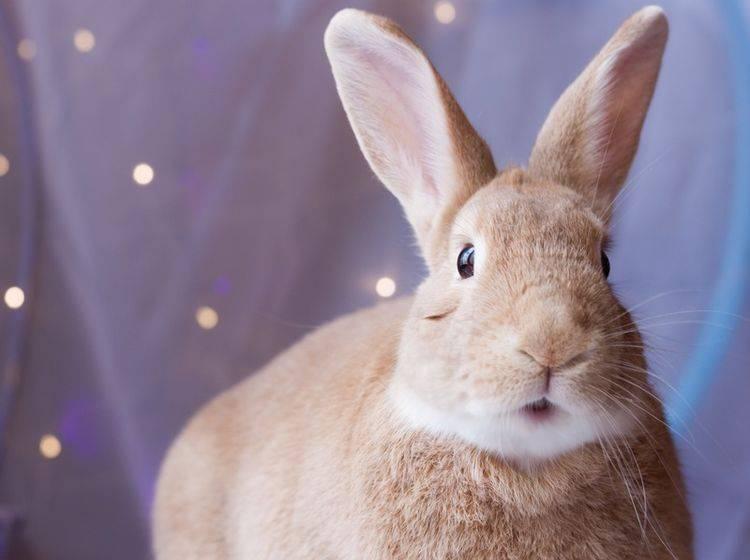 Was das hübsche Kaninchen uns wohl sagen möchte? – Shutterstock / Rabbitti