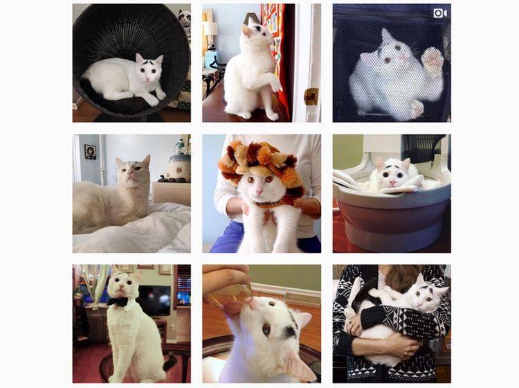 Instagram-Katze: Sams Augenbrauen verleihen ihm seinen traurigen Blick – Bild: Instagram / Samhaseyebrows (Screenshot)