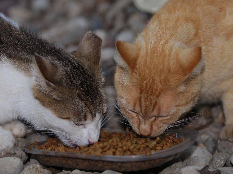 Stoffwechsel bei Katzen: Was ist das Besondere?