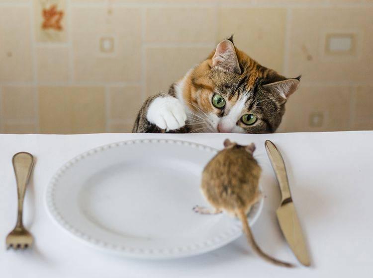 In der freien Natur landen vor allem Mäuse auf dem Speiseplan von Katzen – Shutterstock / Sergey Zaykov