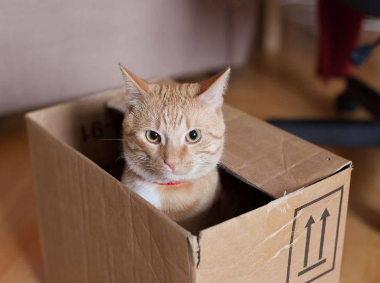 Nicht ganz die Kiste, die Erwin Schrödinger 1935 im Sinn hatte, aber ähnlich – Shutterstock / Dalibor Valek