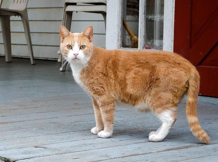 """""""Soll ich bleiben und mich wehren? Oder lieber schnell wegrennen?"""": Katze in Habachtstellung zeigt Kampf-oder-Flucht-Reaktion – Shutterstock / kombattle"""
