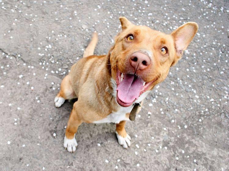 Ein Hundeleben ohne Angst ist doch gleich viel schöner – Shutterstock / Barbytura