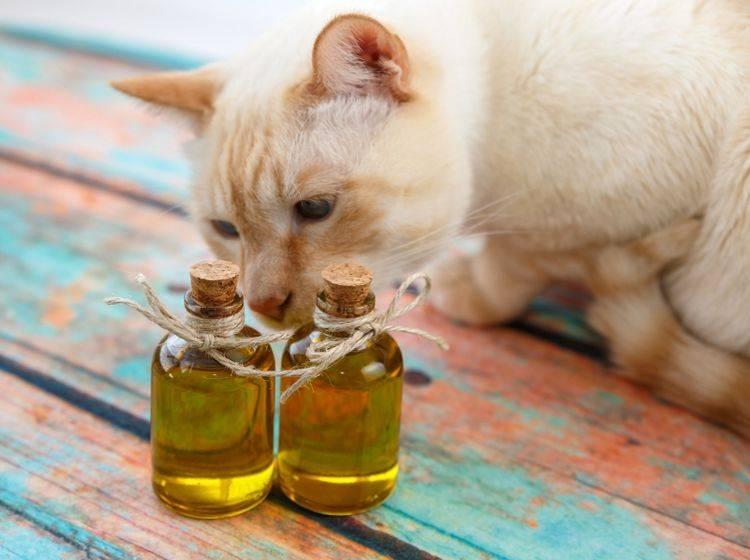 Öle und Fette - und somit auch Fischöl - leisten einen essenziellen Beitrag für die gesunde Katzenernährung – Shutterstock / irinaorel