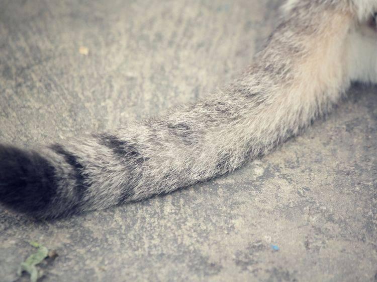 Na hoffentlich beißt niemand in diesen Katzenschwanz hinein – Shutterstock / successo images