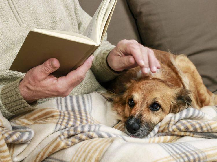 Hunde für alte Menschen kuscheln lieber entspannt auf der Couch, als sich bei actionreichem Hundesport auszutoben – Shutterstock / Agnes Kantaruk