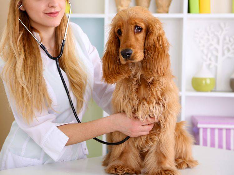 Mit Hilfe vom Tierarzt und einer speziellen Ernährung kann Ihr Hund mit EPI gut leben – Shutterstock / Africa Studio